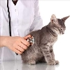 Ветеринарные клиники в Екатеринославке